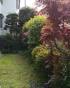 植栽剪定と芝張り前